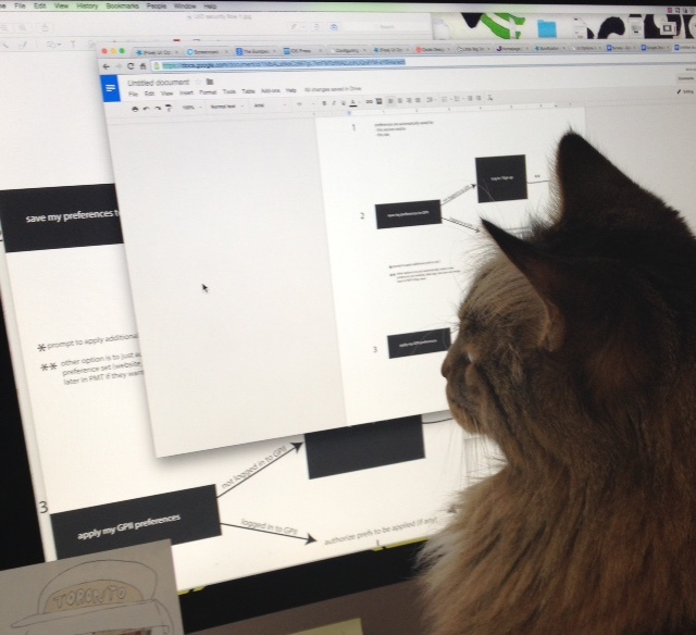 photo of a cat staring raptly at a computer screen, on which is shown some designs related to GPII preferences setting